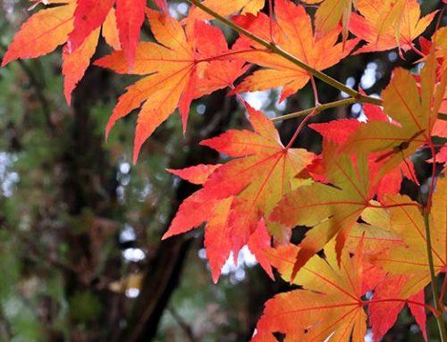 """Súťaž """"Maľovaná jesenná záhrada"""""""