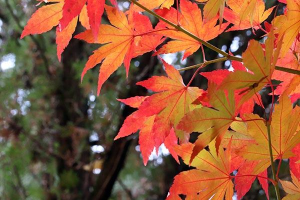 Súťaž Maľovaná jesenná záhrada, foto